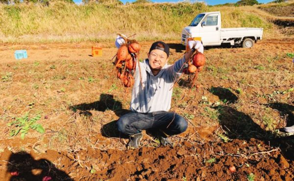 安納芋、種子島、農園