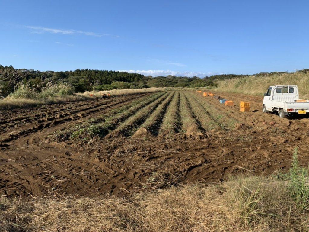安納芋、農園、種子島